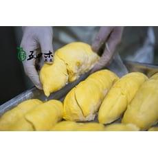 [五甲木]泰國原生種榴槤-重口味不能錯過