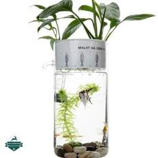 生態小魚缸【SG430】小型迷你水族箱免換水魚缸懶人辦公室半島魚缸創意免換水魚缸小型自潔生態玻璃桌面