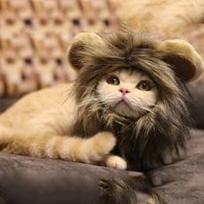 貓咪獅子頭套 小耳朵帽子 狗狗頭套 貓咪頭套 貓咪衣服 變身獅子【葉子小舖】
