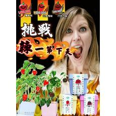 *療癒商品*iPlant開心積木小農場 輕鬆種盆栽系列