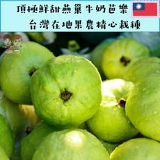 【緁迪水果】高雄燕巢鄉帝王牛奶芭樂    1kg+-10%/袋(產地新鮮直送)