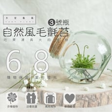 室內療癒植栽 自然風毛氈苔 3號瓶