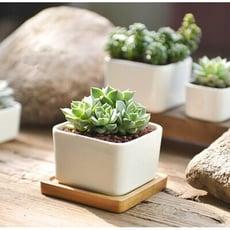 白色正方陶瓷多肉花盆盆栽- 小號+竹托盤