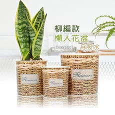 【博士韋爾BOSSWELL】 自動 棉繩吸水 盆栽儲水 柳編田園 懶人盆栽 (三尺寸一組) (PC)