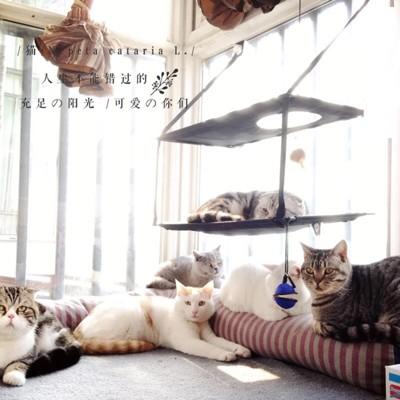 貓咪吊床-美國k&h寵物店專賣吸盤式窗台吊床b00006 - 單層貓跳床賣場