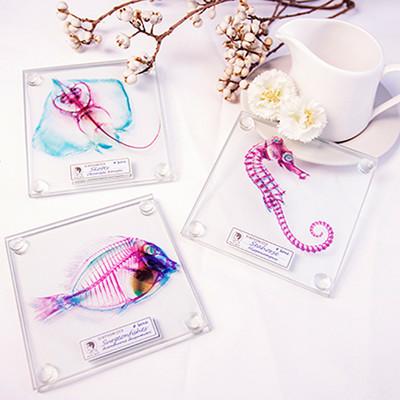 賽先生科學工廠│解析透明魚玻璃杯墊(三款) 一套2片