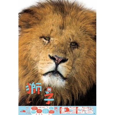 與實物等大:動物園+【HALFTOYS】3D動物樂園......限量套組(二)